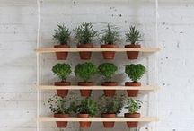 Garden / Tips for plant life and bringing green to your home.