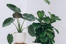 Indoor plants / Indoor plants
