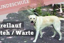 Für Hund & Hundehalter
