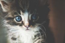 Kitty cats / by Whitney Johnson