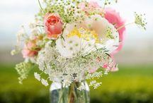 Bloom / by Nikki Hall