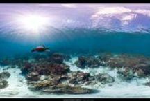 Great Barrier Reef & Marine Biology • Australian Science / by Visit Australia