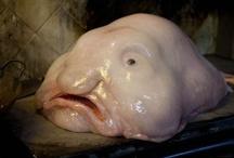 *{animals}* weird underwater creatures / by Jo Wilson