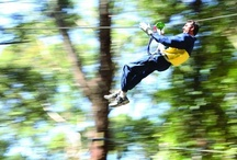 Australian Zip Lines & Canopy Tours / Flying Foxes / by Visit Australia