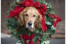 Merry Christmas / by Nikki Hall