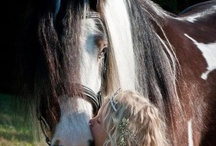 Saving Horses / http://www.facebook.com/pages/Saving-Horses/444578335586924