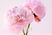 Sweet Peony / Perfect peonies for your wedding day.