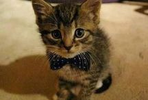Cats in Bowties / Cats. In bowties