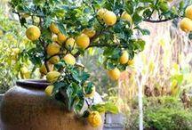 Farm & Garden / farming, gardening, garden paths. Growing veggies, fruits, flowers. greenhouses, coldframes.