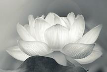 Black & White / by Periain B