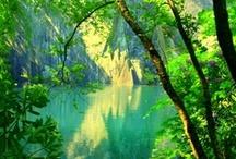The Greens / Apple, aquamarine, beryl, bice, blue-green, chartreuse, emerald, fir, forest, grass, greenish-blue, jade, kelly, lime, malachite, moss, olive, pea, peacock, pine, sage, sap, sea, spinach, verdigris, vert, viridian, willow  / by Periain B