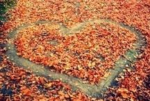 seasonal - Fall.