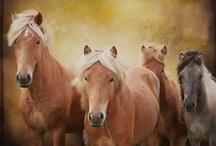 Equus  / by Periain B