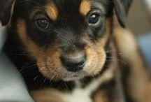IDEE / idee cioè foto di cuccioli fiori e frasi famose