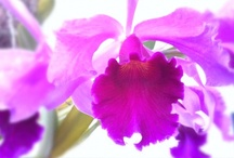 Flowers / by Carolina CV