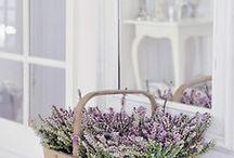 Garden - plants, flowers and design