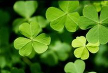 St. Patrick's Day Ideas / All kinds of ideas to celebrate in all kinds of classrooms. / by Teach For America
