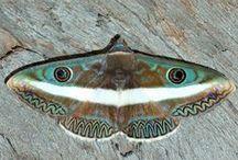 butterflies, moths and dragonflies / butterflies,moths and dragonflies