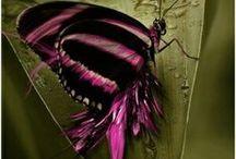DRAGONFLYS/ FIREFLYS/ BUTTERFLYS  / by Myrtle Philbeck