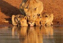 Animals Galor!