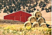 Barns / by Sara Sherrill Conners