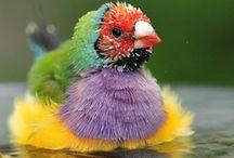 BIRDS / by Myrtle Philbeck