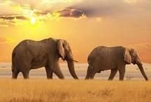 ELEPHANT'S  / ♥ GENTLE GIANTS ♥ / by Prairie Flower