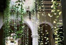 Herbarium / by Tracey-Louise Brandt