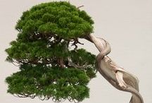 Bonsai / Beautiful bonsai trees