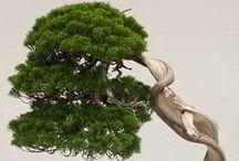 Bonsai / Beautiful bonsai trees