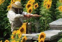 Beekeeping / by Teresa Thiemann