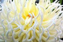 FLOWERS (3) / by Prairie Flower