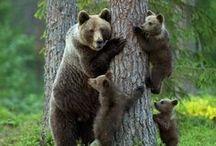 Bears / by Sara Sherrill Conners