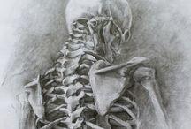 Bases du dessin / Pour s'entraîner à dessiner, les squelettes, les corps, n'abandonnez rien !!!