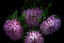purple love / by Amy Sovoda