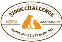 ASPCA $100K Challenge News / You got us in, now help us win!  The only shelter in WA state competing to save more lives alongside 46 shelters nationwide.  Get involved -- adopt, donate, volunteer.  $100,000 grant will go a long way toward Yakima County's 1st high quality, high volume spay / neuter clinic!