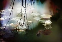 Secret Garden / by Keara Ramsey