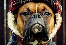 *Pups* / by Samantha Albensi