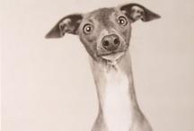 Sighthounds & Lurchers / by Tara Mitchell