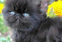 *Kitty Caaat* / by Samantha Albensi