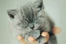 Cute Adorableness / cute animals