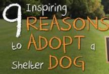 OCTOBER: Adopt-A-Shelter-Dog Month / You've been thinking, reading & preparing for your furry best friend -- October is for you, ADOPTER!  Join the club of super dog adopters -- read tips, meet adoptable dogs & REPIN.