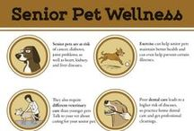 NOVEMBER: Adopt-A-Senior-Pet Month