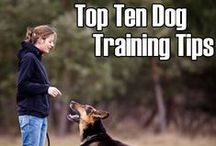 National Train Your Dog Month / Teach your dog new tricks!