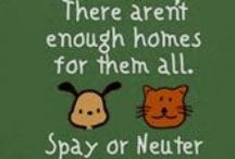 Spay and Neuter / Spay and Neuter to save the lives of dogs and cats. Let us end pet homelessness and pet overpopulation together!