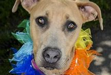 SEE SPOT FUN RUN & DOGGIE DASH / Yakima Humane Society's annual 5K Fun Run & Doggie Dash. Activities. Family Fun. Food. Refreshments. Entertainment. Gather Pledges and Earn Prizes and Win Big! Go to www.yakimahumane.org to register.
