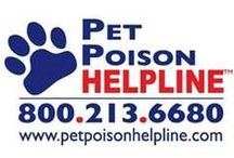 Pet Poison Awareness Month / Protecting our treasured family pets be safe and healthy at all times.