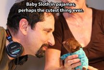 Painfully Cute / by Josh Swinehart