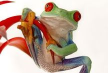 Frogs and Toads / by Chantelle Thompson