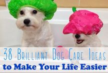 HEALTH: PET HEALTH+CARE+FOOD / This Board is dedicated to finding and providing the Best Resources and Health and Natural Healing Information, as well as Nutritional Information and Recipes for our beloved Pets.